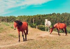 Tres caballos fotografía de archivo