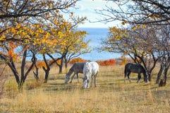 Tres caballos en el jardín por el lago foto de archivo libre de regalías