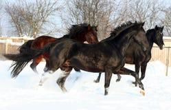 Tres caballos en la nieve Imagen de archivo libre de regalías