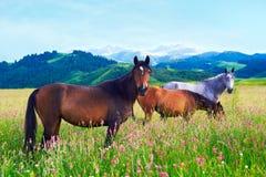 Tres caballos en un prado Foto de archivo libre de regalías