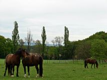 Tres caballos en un prado Imágenes de archivo libres de regalías