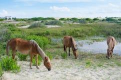 Tres caballos salvajes que pastan Fotografía de archivo libre de regalías