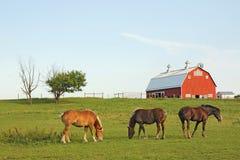 Tres caballos y un granero Fotos de archivo libres de regalías