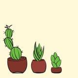 Tres cactus dibujados mano Imagen de archivo