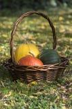 Tres calabazas en cesta de mimbre, calabaza amarilla de los espaguetis, calabaza verde del moscatel y la calabaza de Hokkaido de  Fotos de archivo libres de regalías
