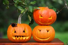 Tres calabazas talladas para Halloween Imagenes de archivo