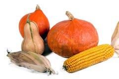 Tres calabazas y maíces en el fondo blanco Foto de archivo