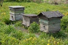 Tres casas de madera de la colmena para las abejas se colocan en hierba en el pueblo Foto de archivo