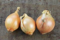 Tres cebollas marrones foto de archivo libre de regalías
