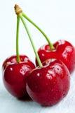 Tres cerezas rojas. Foto de archivo