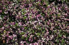 Tres colorea las hojas Imagen de archivo