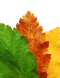 Tres colores Imagen de archivo libre de regalías