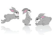 Tres conejos grises. Fotos de archivo