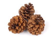 Tres conos de abeto Foto de archivo libre de regalías