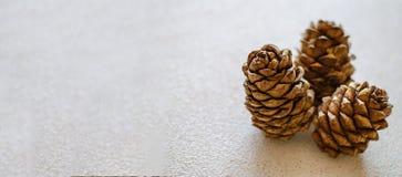 Tres conos del cedro cerca para arriba en un fondo blanco fotografía de archivo libre de regalías
