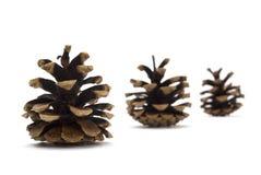Tres conos del pino Imagenes de archivo