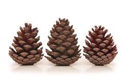 Tres conos del pino aislados Foto de archivo libre de regalías