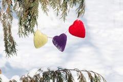 Tres corazones del amor del día de tarjetas del día de San Valentín que cuelgan en árbol de pino fotografía de archivo libre de regalías
