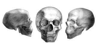 Tres cráneos exhaustos Imagen de archivo libre de regalías