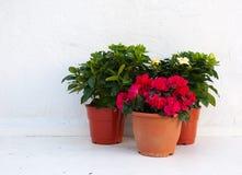 Tres crisoles de flores en una pared blanca Fotografía de archivo libre de regalías