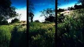 Tres cristales verticales de la naturaleza de campo metrajes
