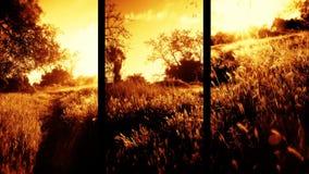 Tres cristales vibrantes de la naturaleza de campo metrajes