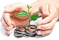 Tres, das auf Münzen wächst Lizenzfreies Stockfoto