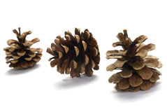 Tres de conos del pino Imagen de archivo libre de regalías