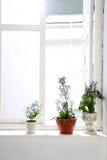 Tres de las flores violetas Foto de archivo libre de regalías