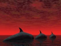 Tres delfínes Foto de archivo libre de regalías