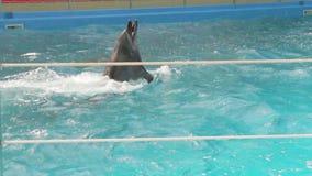 Tres delfínes entrenados que nadan almacen de video