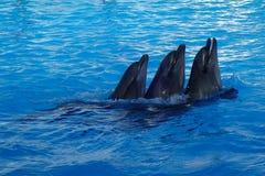 tres delfínes están nadando fotos de archivo