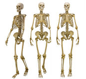 Tres esqueletos humanos aislados en blanco Foto de archivo