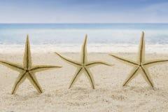 Tres estrellas de mar en la playa imagenes de archivo