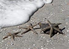 Tres estrellas de mar (estrellas de mar) Foto de archivo