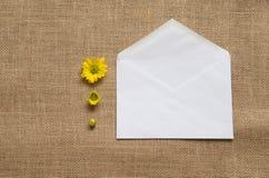Tres etapas de las margaritas florecientes - camomiles en la arpillera Imágenes de archivo libres de regalías
