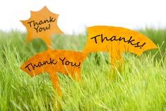 Tres etiquetas con agradecen le y gracias en hierba Imagenes de archivo