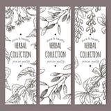 Tres etiquetas del té del vector con el árbol, el muérdago y el bérbero de cal libre illustration