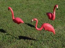 Tres flamencos rosados Imagenes de archivo