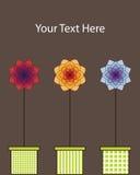 Tres flores Imágenes de archivo libres de regalías