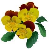 Tres flores amarillas del pensamiento Imágenes de archivo libres de regalías