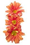 Tres flores anaranjadas Foto de archivo