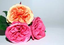 Tres flores de amor Foto de archivo libre de regalías
