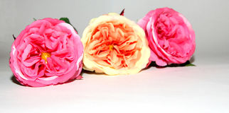 Tres flores de amor Foto de archivo