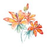 Tres flores de la acuarela Fotografía de archivo libre de regalías