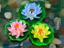 Tres flores de loto Fotografía de archivo libre de regalías