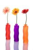 Tres flores del gerbera en floreros coloridos Fotografía de archivo