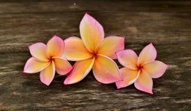 Tres flores del plumeria Fotos de archivo