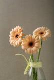Tres flores frescas en el florero de cristal Imagen de archivo
