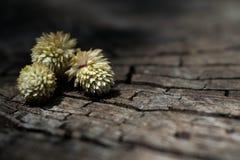 Tres flores puestas en una madera agrietada vieja Imagen de archivo